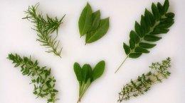 Pb_herbs_main_pfc_onecolumn