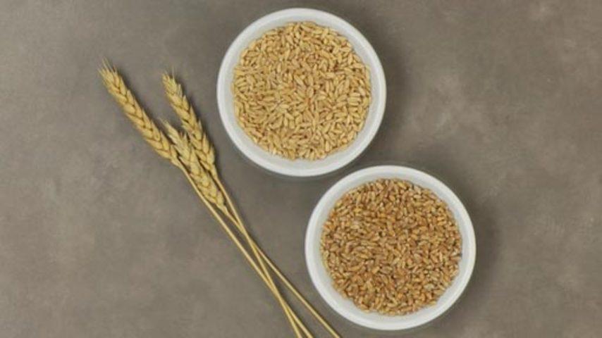 Tdd spring winter wheat b hd854