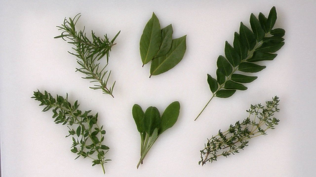 How to Use & Cook w/ Herbs