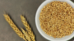 Thumbnail wheat   gluten lessons 2