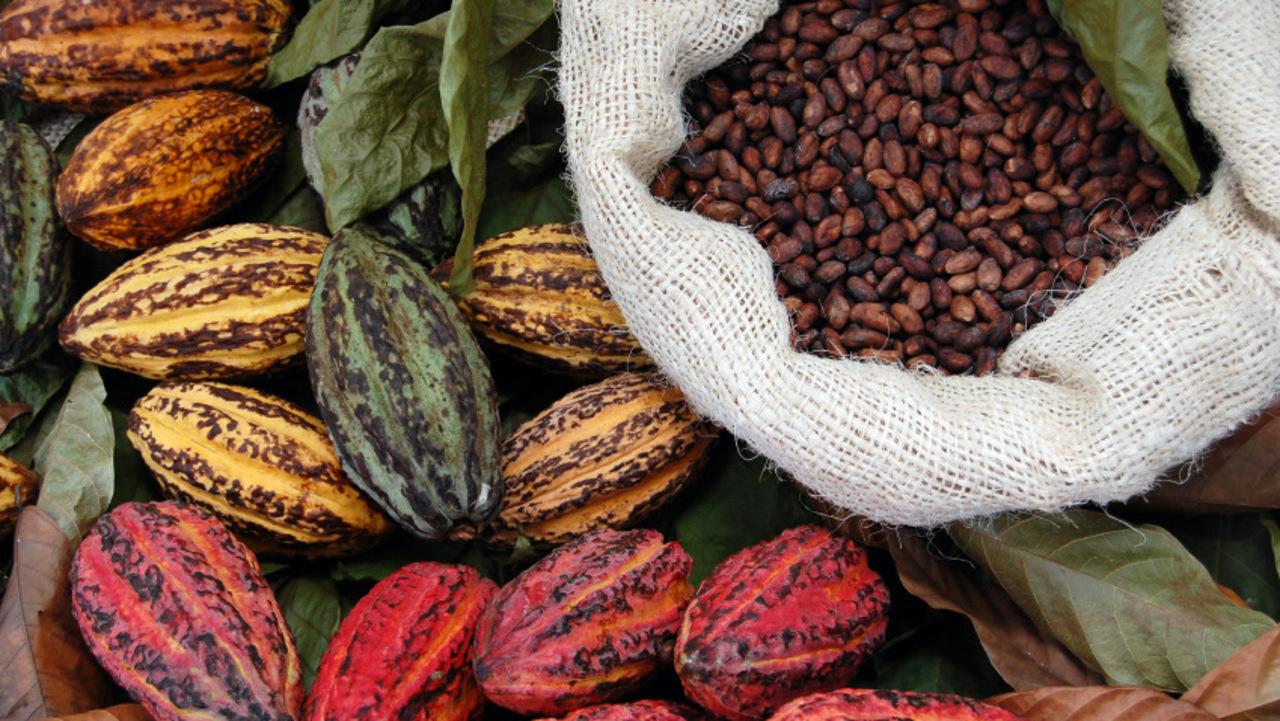Basics of Quality Chocolate