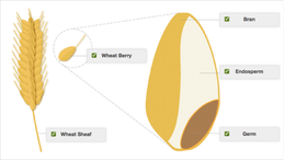 Onecolumn_wheat_diagram_completed